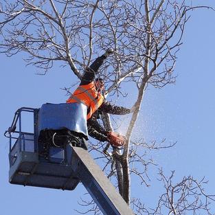 Baumkontrolleure