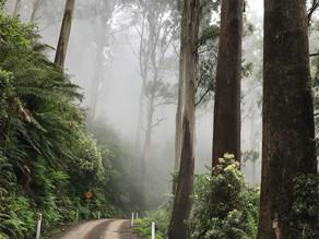 Yarra Valley bush walks