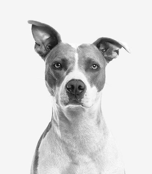 株式会社PET ペット葬儀