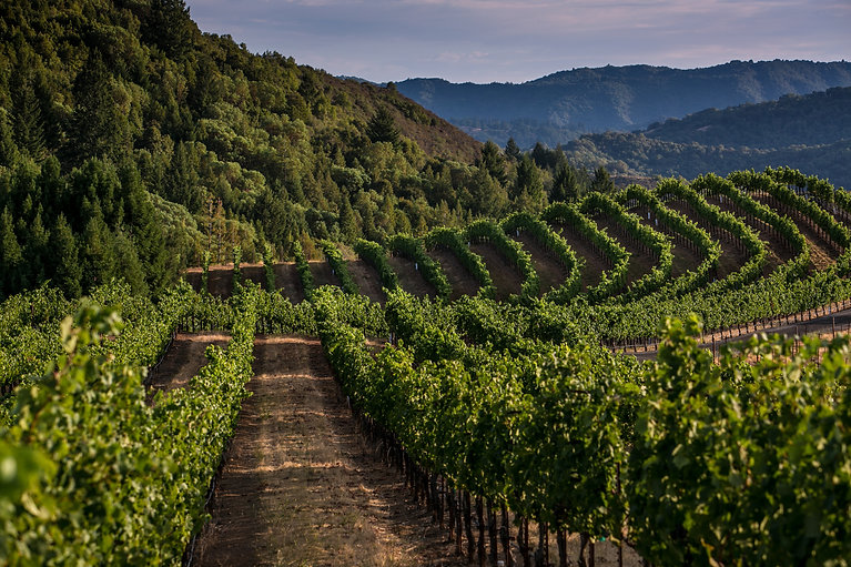 Sonoma County Strip - Dec 2020.jpg