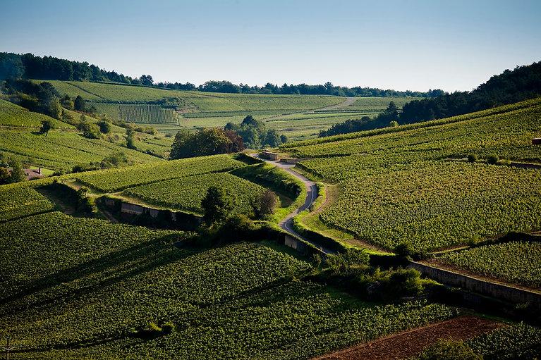 2_Bourgogne-Chablis_Landscape-resized.jp