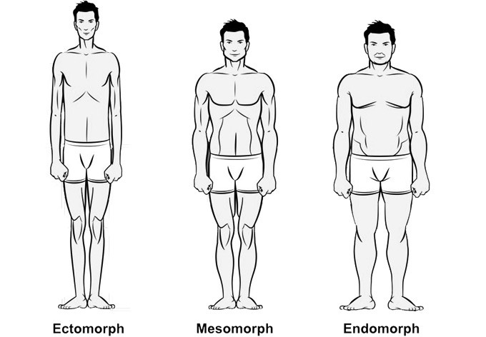 The 3 main body types