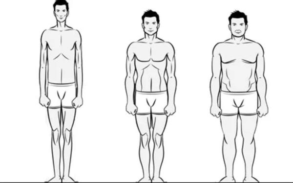 Ectomorph, Mesomorph & Endomorph body-types.