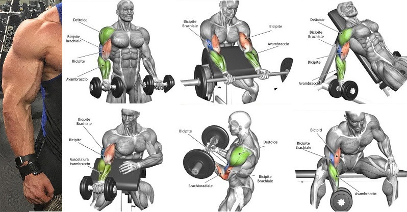 Bicep movements