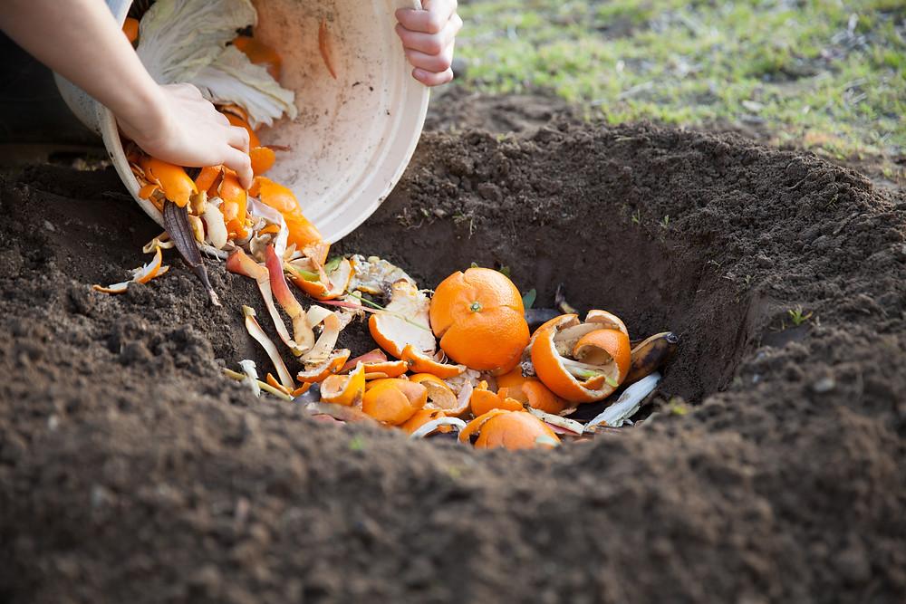 burying orange scraps in the ground
