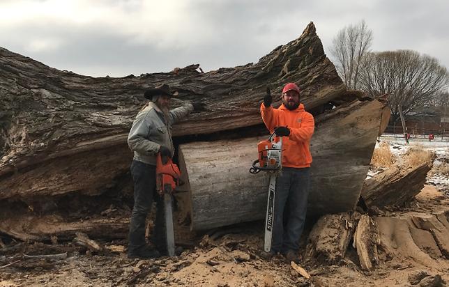 Tree Services Boise Idaho