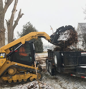 Tree Removal Boise, Idaho