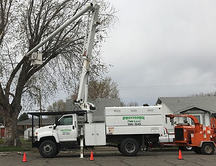 Tree Trimming Boise, Idaho