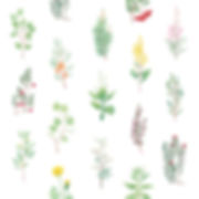 kasviprintti-01.jpg