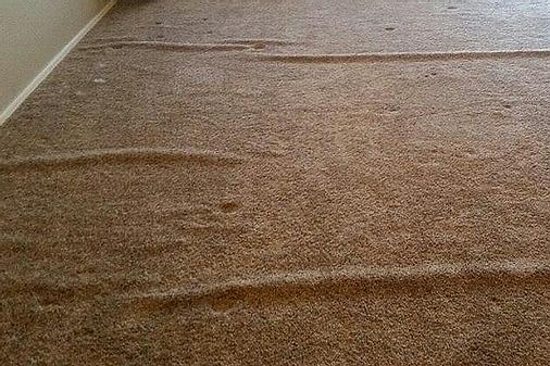 carpet wrinkles.png
