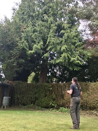 Tree Surveys and reports.jpg