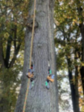 Kurious Climbing 1.jpg