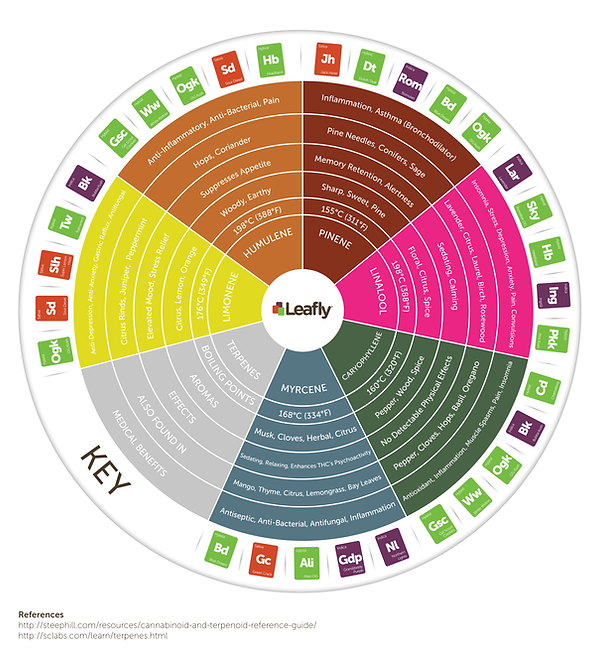 Leafly Terpene Wheel.png