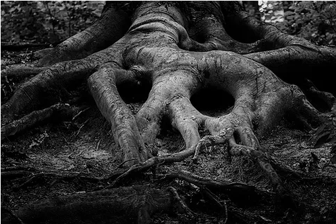 Uproot the Root!