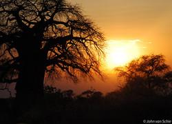 Apenbroodboom (Baobab)