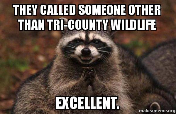 Raccoon Meme