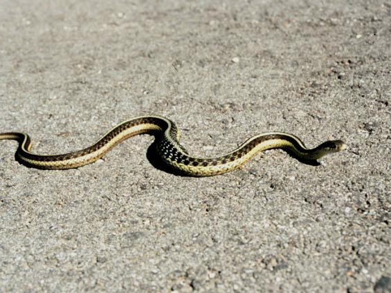 Snake Control & Removal