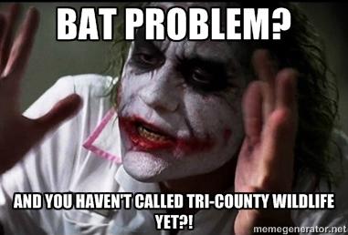Bat Meme