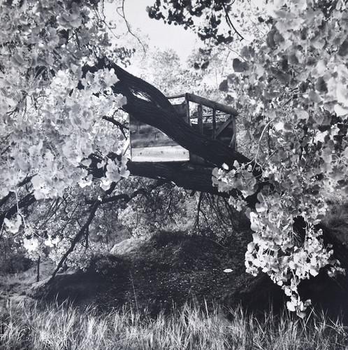Treehouse, Autumn - Galisteo NM