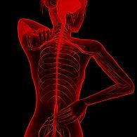 human-nervous-system-illustration-535643