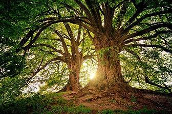 tree-3822149_1280_large.jpg