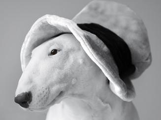 english-bull-terrier-4202822_1920.jpg