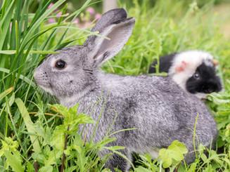 rabbit-2427841_1920.jpg