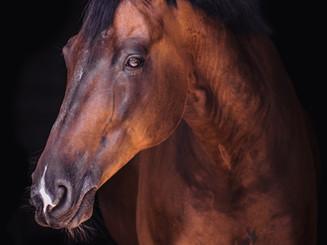 horse-4044547_1920.jpg