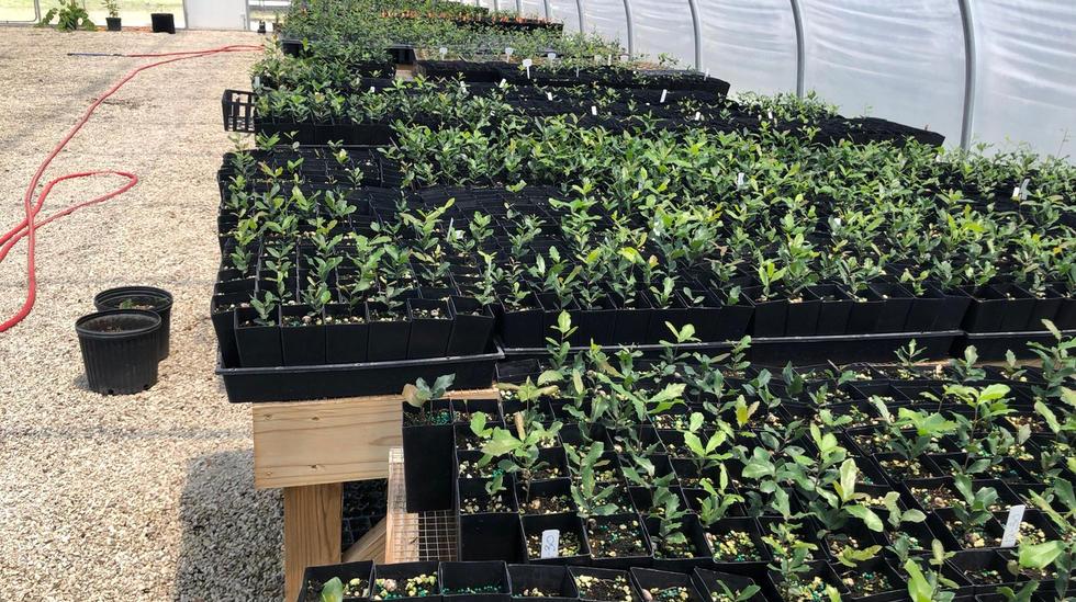 greenhouse 4.jpeg