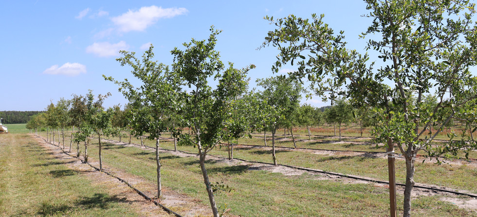 Penderlea Farms Field