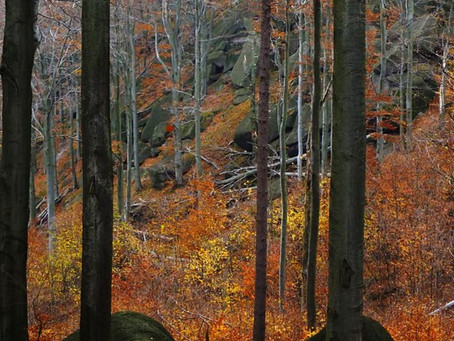 Primeval forest in Jizera Mountains placed on UNESCO World Heritage list