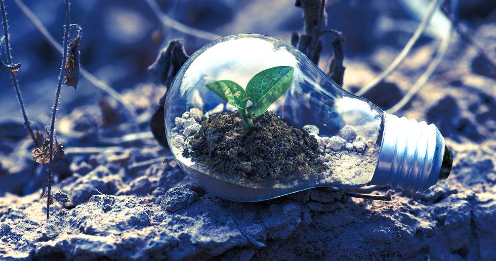 clear-light-bulb-planter-on-gray-rock-1108572_edited.jpg