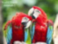 Audio Vocabulary Spanish Animals One