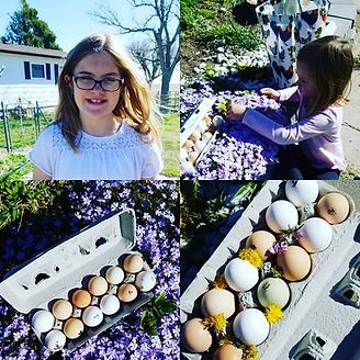Audree Ellie Eggs 2.png