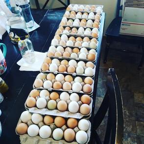 Prairie Opal Eggs 5.jpg