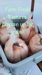 Pastured Chickens June 2020 2.jpg