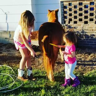 horse time.jpg