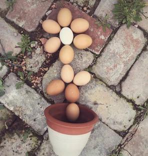 Prairie Opal Eggs 4.jpg