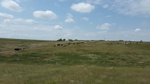 the prairie.jpg
