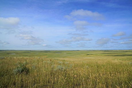 grass pasture.png