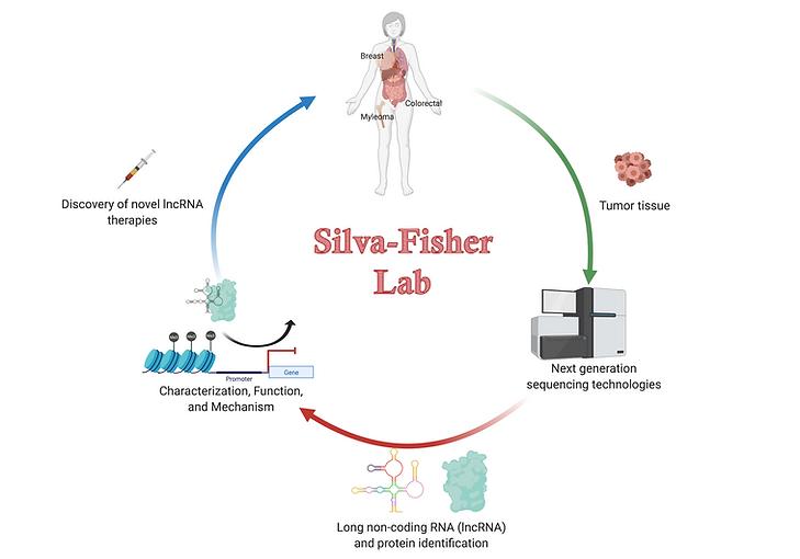 SF lab diagrams-1.png