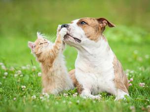 #023 Energiebedarf von Hund & Katze berechnen