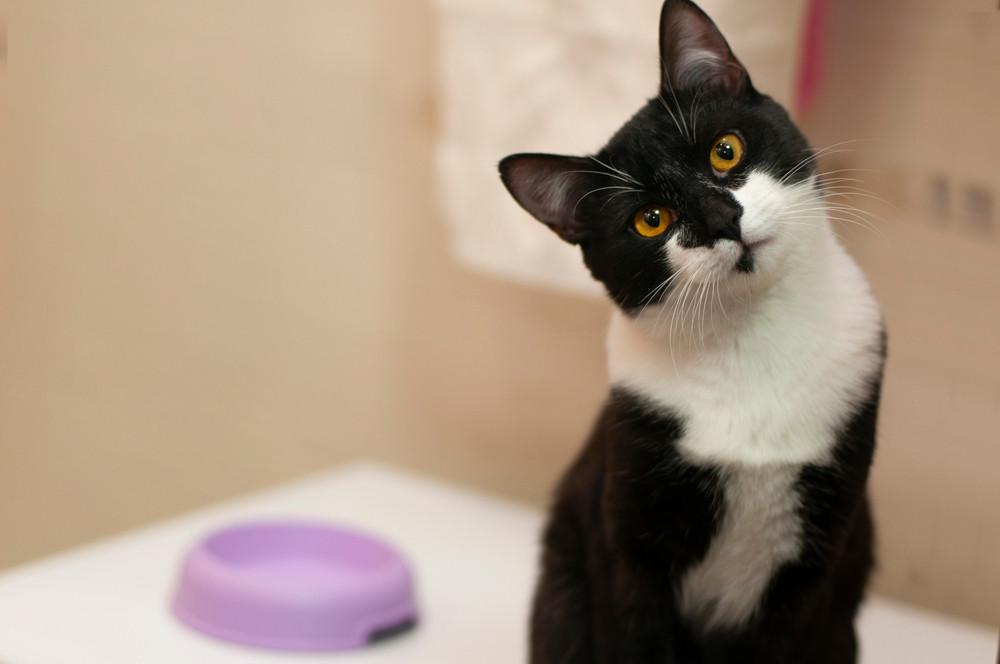 schwarz weiße Katze