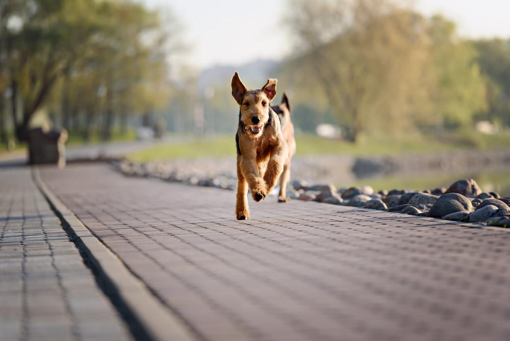 laufender Hund Energiegehalt