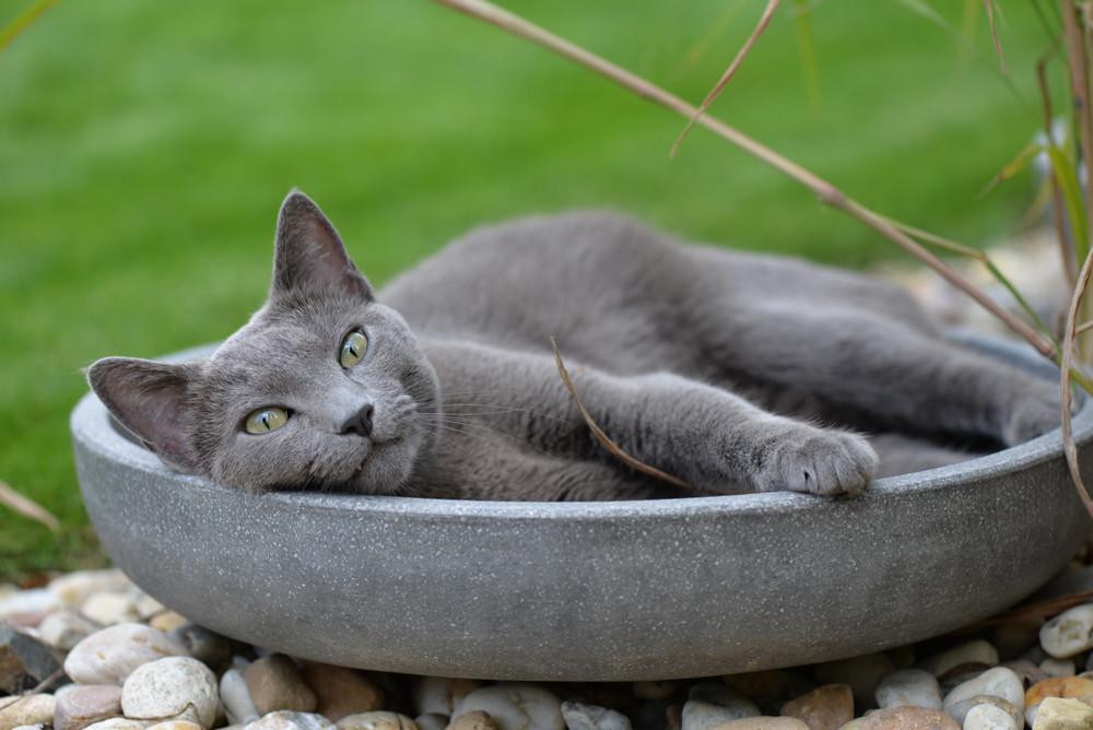 Katze in einer Schüssel
