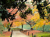 Autumn leaves in a Japanese park during our Shades of Autumn small group tour of Japan.