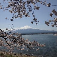 Lake Kawaguchi with Mt. Fuji in the background during our Spring Sakura small group tour of Japan.