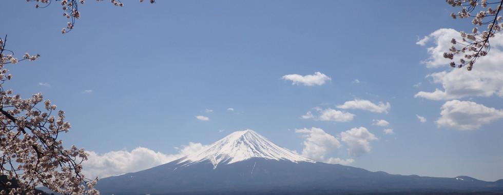 Mt Fuji Sakura