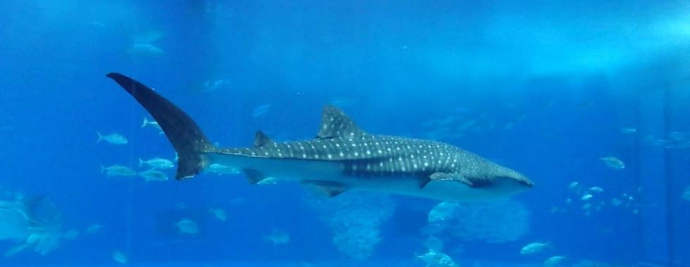 Churaumi Aquarium in Okinawa