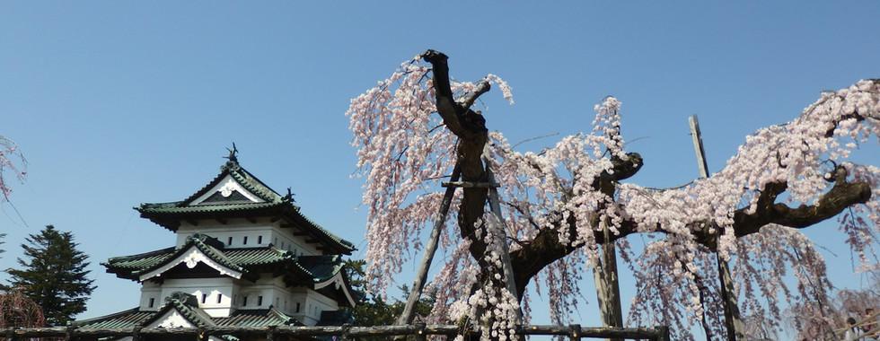 Hirosaki Castle and Mt Iwaki